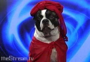 Psychic Dog Tells Future of Power Hour Photo