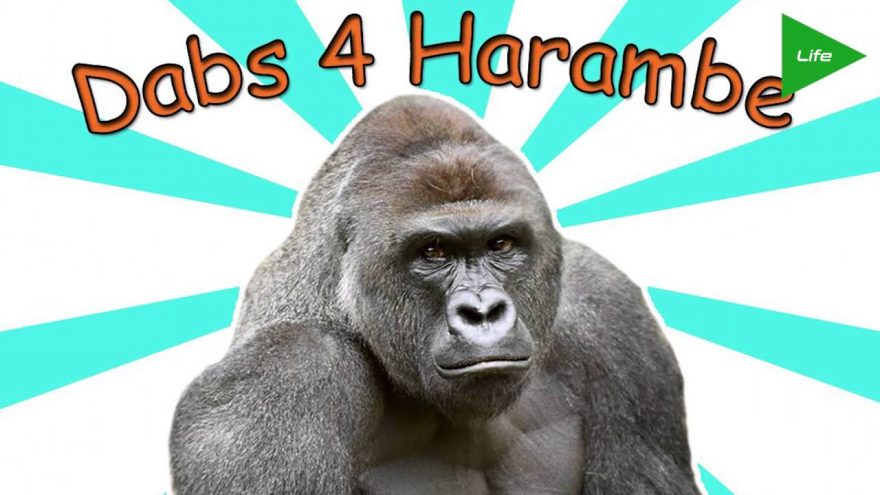 HARAMBE Has A WEED STRAIN on theFeed!